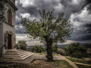 Европейские деревья с самыми интересными историями