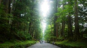 Самая длинная в мире аллея — Кедровая аллея Никко, Япония