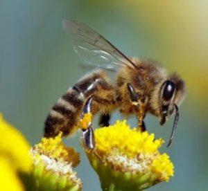Пчёлы могут решать математические задачи, которые ставят в тупик малыша