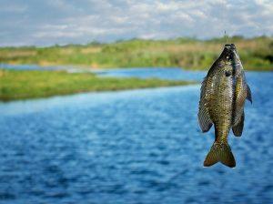 Интернет-магазин рыболовных снастей и снаряжения для настоящих рыбаков