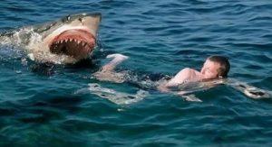 Невероятный бой между человеком и акулой