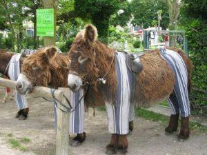 Остров Иль-де-Ре — здесь ослы носят пижаму