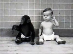 Малыш Дональд и обезьянка Гуа: к чему привело общее воспитание ребёнка и шимпанзе