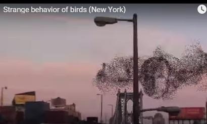 Особа путина з птахів